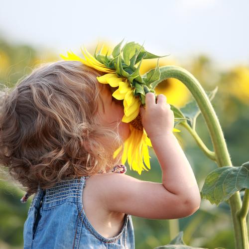 Ребенок нюхает подсолнух и радуется жизни!