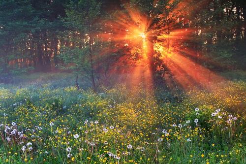 Солнце утром пробивается сквозь деревья.