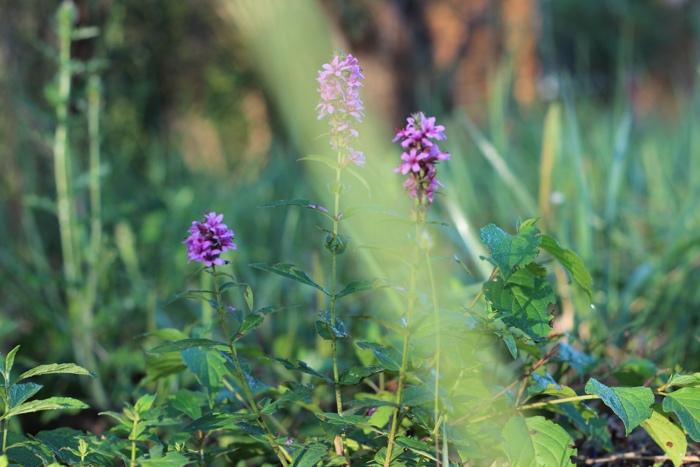 Трава и цветы на нашем участке
